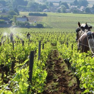 In mean time, 501 hand spraying and ploughing with Coquette in Les Quarts